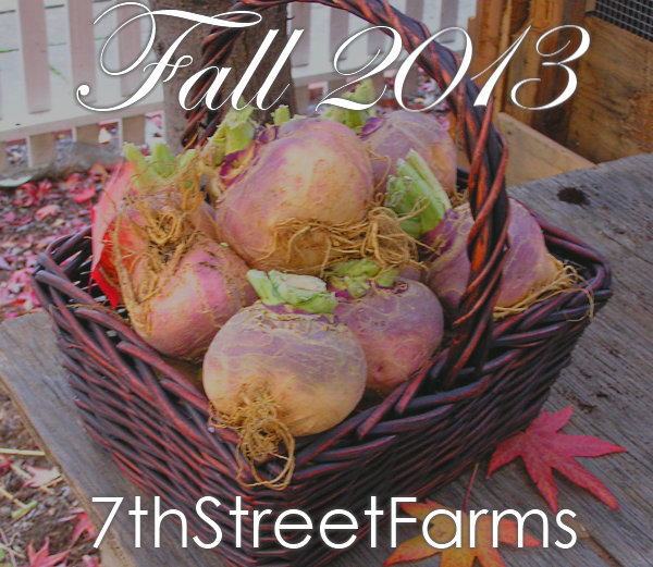 Fall 7thStreetFarms2013-100ppi